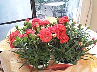 Mama1_20120516_94514_1600x1200